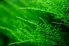 Musci di muscus del lichene del muschio acquatico; erbe acquatiche; acqua ed erba; piante acquatiche; pianta acquatica fotografia stock libera da diritti