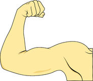 Muscle Royalty Free Stock Image