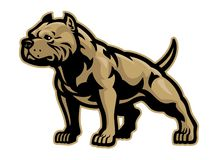 Free Muscle Athletic Body Of Pitbull Dog Stock Photos - 160468873