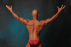 Muscle back. Bald male with muscular back Royalty Free Stock Photography