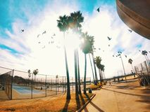 Muscle beach west coast with palm trees stock image
