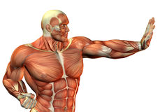 Muscle Body Builder in fighting pose. 3D Rendering Muscle Body Builder in fighting pose Royalty Free Stock Photos