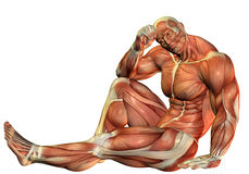 Muscle Body builders in a seated pose. 3D Rendering Muscle Body builders in a seated pose Royalty Free Stock Images