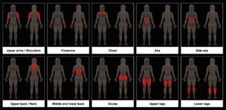 Muscle Chart Female Body Parts Black Background. Muscle chart - female body, frontal and back view with highlighted red muscle parts - isolated vector Royalty Free Stock Photo