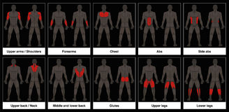 Muscle Chart Male Body Parts Black Background. Muscle chart - male body, frontal and back view with highlighted red muscle parts - isolated vector illustration Royalty Free Stock Image
