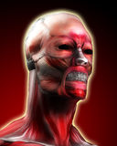 Muscle Face 3. A face made out of muscle for medical or horror concepts Royalty Free Stock Photo