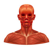 Muscle face Royalty Free Stock Photo