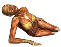 Muscle female body lying Stock Photo