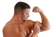 Muscle Gain. A bodybuilder measuring the increase in his bicep Stock Image