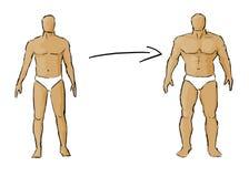 Muscle gaining. Illustration showing progress of gaining muscle stock illustration