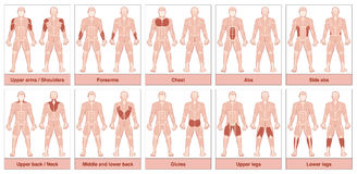 Muscle Groups Chart. Muscle group chart - male body with the largest human muscles, divided into ten labeled cards with names and appropriate highlighted muscle Stock Photography