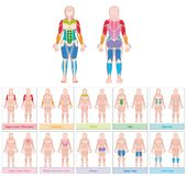 Muscle Groups Female Body Colored Chart. Muscle groups of a female body - chart with largest muscles - ten colored labeled cards - isolated vector illustration Stock Images