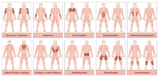 Muscle Groups German Names Chart. Muscle chart with german names - male body with the largest human muscles, divided into ten labeled cards with names and Royalty Free Stock Images