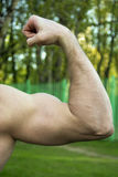 Muscle hand Stock Photography