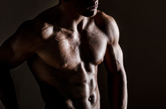 Muscle male chest. Muscle beautiful male upper torso Stock Images
