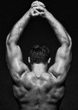 Muscle male model Stock Images