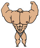 Muscle Man. Illustration of a muscle man whose muscles have engulfed his head Stock Images