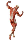 Muscle man back view Stock Photography