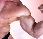 Muscle man biceps isolated. On pink background stock photos