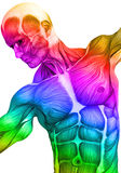 Muscle man close up. The muscle medical man illustration is a good choice for the ones that are studding the human body Stock Images