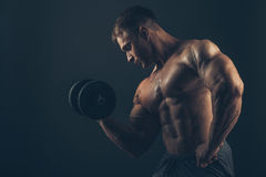 Muscle man doing bicep curls Royalty Free Stock Image