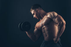 Muscle man doing bicep curls.  stock images