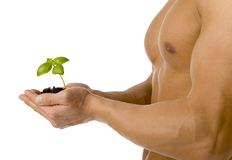Muscle Man holding small seedling Royalty Free Stock Images