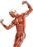 Muscle man Stock Image