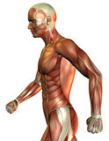Muscle man over the side. 3d render Muscle man over the side Royalty Free Stock Image