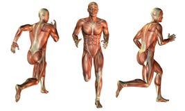 Muscle man at run vector illustration