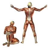 Muscle man sitting and standing Royalty Free Stock Photography