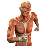 Muscle man upper body. 3D Rendering of a Muscle man upper body Royalty Free Stock Photography