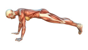 Muscle Maps Royalty Free Stock Photography