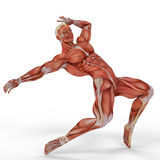 Muscle medical man ballet dance Royalty Free Stock Photos