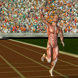 Muscle structure of a Sportles with victory pose Stock Images