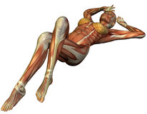 Muscle structure of a supine woman Stock Image