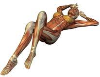 muscle struktury supinum kobiety Obraz Stock