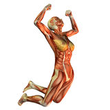 Muscle study, women make the leap. 3D rendering of muscle a woman leaping Royalty Free Stock Photos