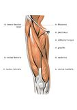 Muscle system Stock Photo