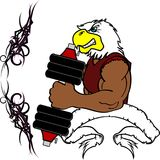Muscle eagle cartoon fitness weight training gym. Muscle wild animal cartoon fitness weight training gym in vector format very easy to edit Stock Image