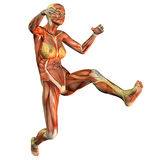 Muscle of a woman jumping. 3D rendering of the muscles of a woman jumping Royalty Free Stock Images