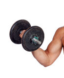 Muscled arm lifting weights Stock Image