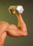 Muscled arm with weight Stock Photography