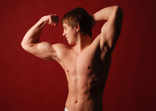 Muscled male model Stock Images