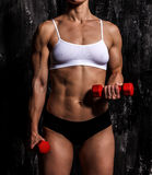 Muscled woman. With red barbells Royalty Free Stock Photos