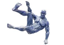 Muscleman Anatomy Heroic Body Parkour Jump Pose Two In White Background Stock Photo