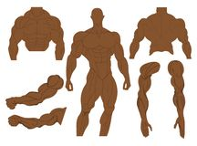 Muscles anatomy of a human body. Male muscular anatomy. Vector illustration. Muscles anatomy of a human body.Male muscular anatomy. Vector illustration royalty free illustration