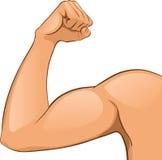 Muscles du bras de l'homme Image stock