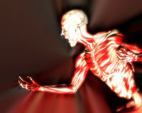 Muscles On Human Body 10 Royalty Free Stock Images