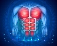 Fit body heart beat. Muscles of the human body, torso and arms, beautiful colorful illustration on an abstract blue background and normal cardiogram at the vector illustration